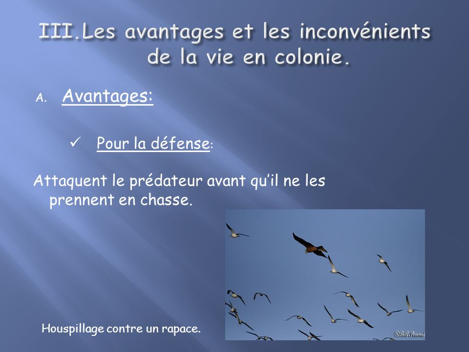 A.Avantages: Pour la défense : Attaquent le prédateur avant quil ne les prennent en chasse.
