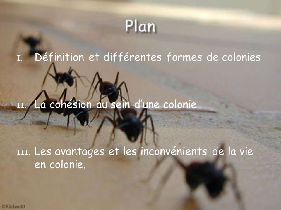 I.Définition et différentes formes de colonies II.