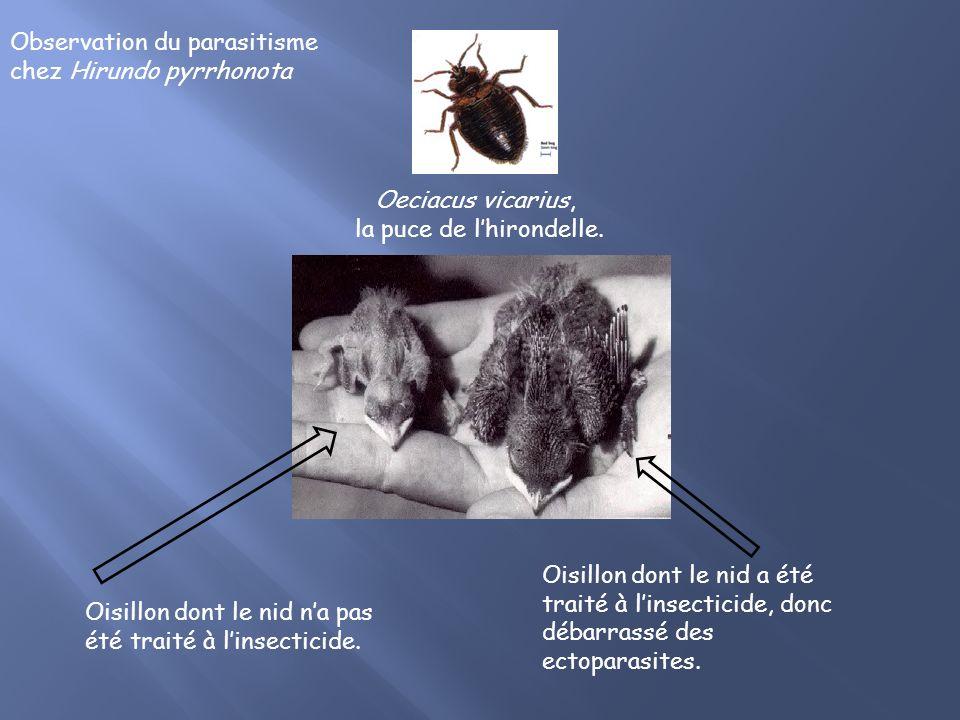 Oisillon dont le nid na pas été traité à linsecticide.