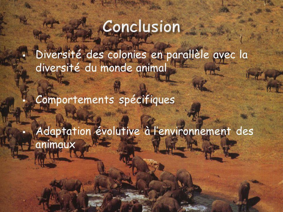 Diversité des colonies en parallèle avec la diversité du monde animal Comportements spécifiques Adaptation évolutive à lenvironnement des animaux