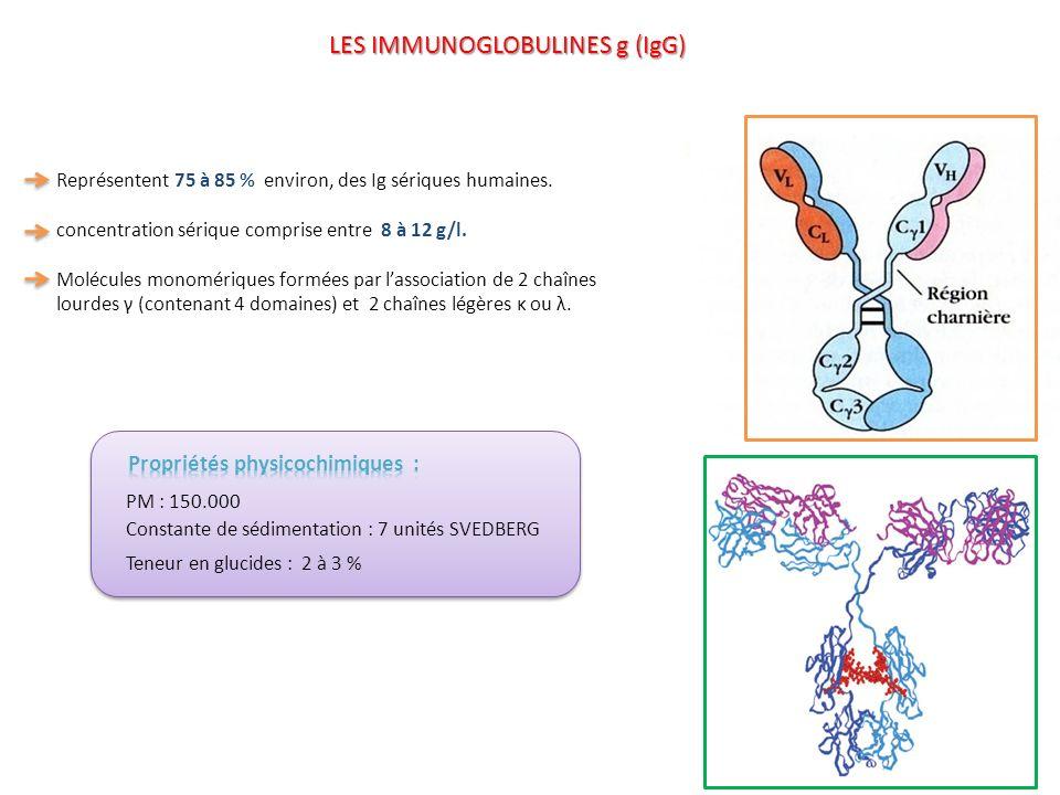 4 sous classes dénommées IgG1, IgG2, IgG3, IgG4 se distinguant entre elles par : Des déterminants antigéniques de s/classe distincts et localisés dans la partie constante des chaînes lourdes (fragment Fc).