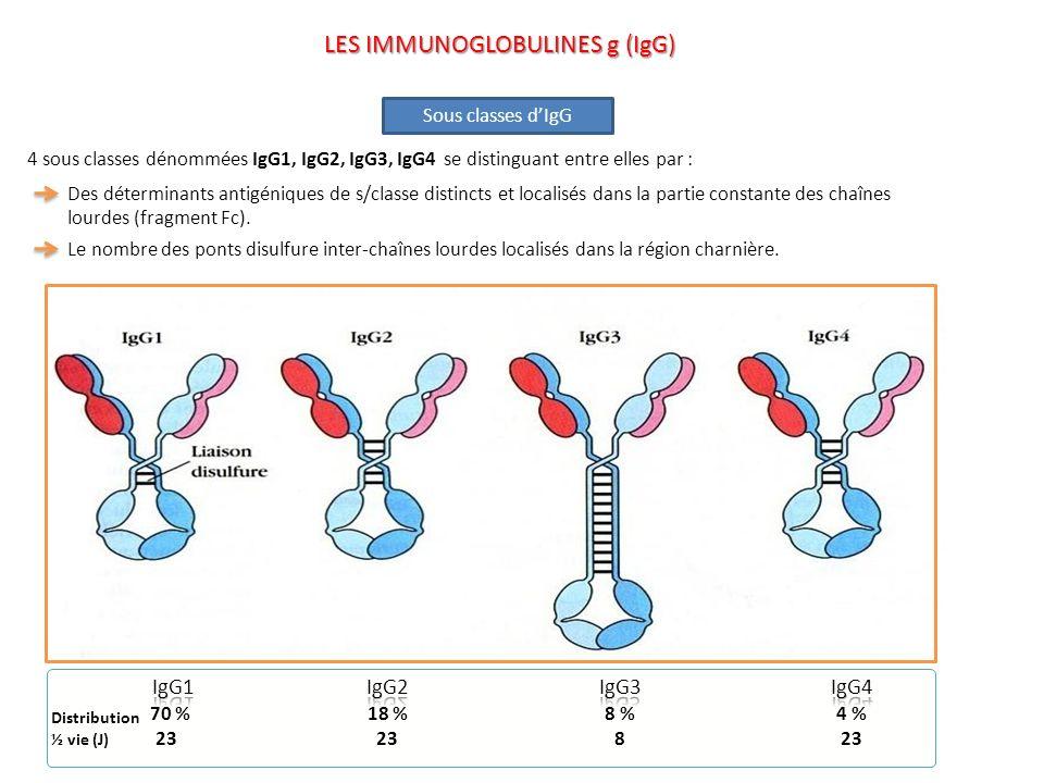 Activation du complément par la voie classique Activation du complément par la voie classique Cascade du complément + LYSE ou ELIMINATION Opsonisation Opsonisation FcR Bactérie L IgG1 et IgG3 se lient avec une forte affinité aux récepteurs du Fc des cellules phagocytaires et médient ainsi lopsonisation, lIgG4 a une affinité intermédiaire et lIgG2 a une affinité extrêmement faible.