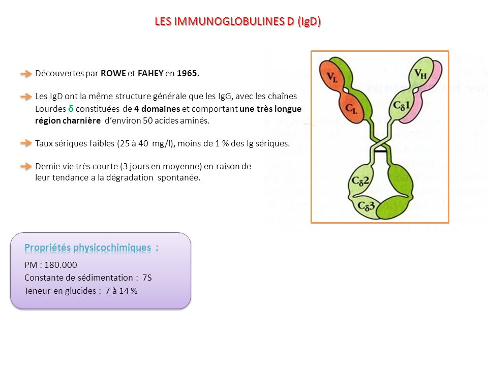 Les IgD sont présentes à la surface des lymphocytes B du sang périphérique.