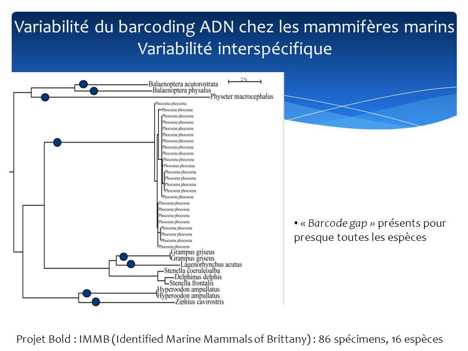 Sauf pour les Delphininae (divergence entre S.frontalis and D.