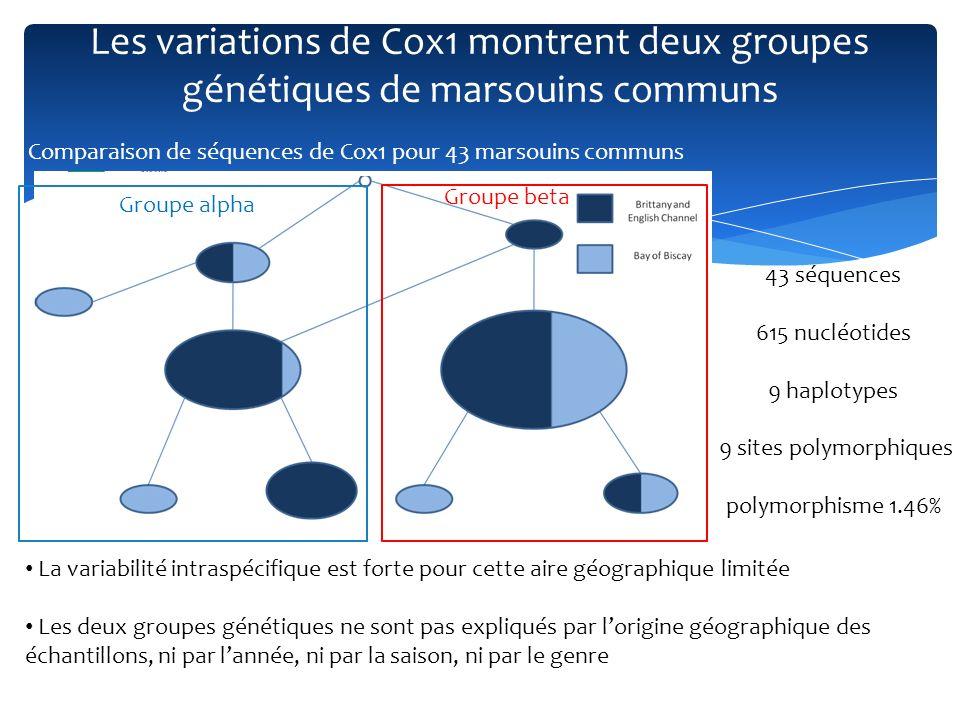 Une explication géographique à léchelle européenne Arbre, obtenu par maximum de vraisemblance, pour 56 haplotypes de marsouin commun définis sur un fragment de 334 paires de bases de la region de controle mitochondriale Même groupes avec MCR Comparaison avec des séquences provenant dautres études (Tiedemann et al, 1996; Walton, 1997 ; Tolley et al, 2001; Tolley and Rosel, 2006; Viaud- Martinez et al, 2007) Une double origine de population explique la structure génétique des marsouins communs retrouvés le long de la côte française