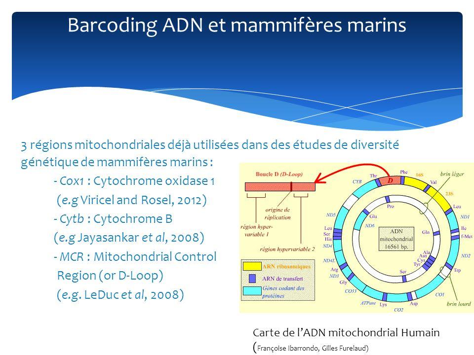 Variabilité du barcoding ADN chez les mammifères marins Variabilité interspécifique 86 individus, 16 espèces, Cox 1 Séparation cétacés/carnivores (divergence 22% ) Projet Bold : IMMB (Identified Marine Mammals of Brittany) : 86 spécimens, 16 espèces Cétacés Carnivores