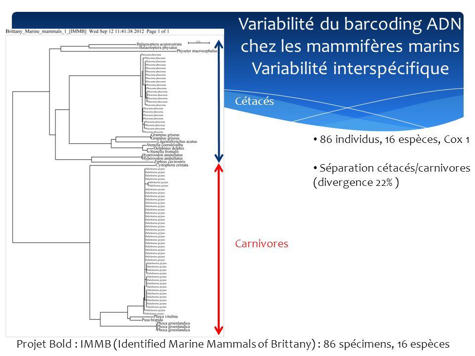 Séparation entre odontocètes and mysticètes (15%) Mysticètes Odontocètes Variabilité du barcoding ADN chez les mammifères marins Variabilité interspécifique Projet Bold : IMMB (Identified Marine Mammals of Brittany) : 86 spécimens, 16 espèces
