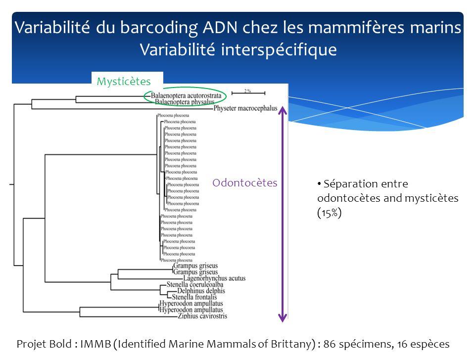 « Barcode gap » présents pour presque toutes les espèces Projet Bold : IMMB (Identified Marine Mammals of Brittany) : 86 spécimens, 16 espèces Variabilité du barcoding ADN chez les mammifères marins Variabilité interspécifique