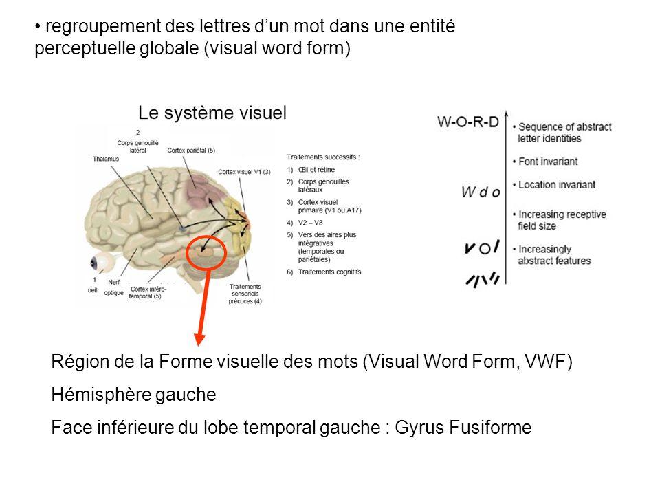 regroupement des lettres dun mot dans une entité perceptuelle globale (visual word form) Région de la Forme visuelle des mots (Visual Word Form, VWF) Hémisphère gauche Face inférieure du lobe temporal gauche : Gyrus Fusiforme