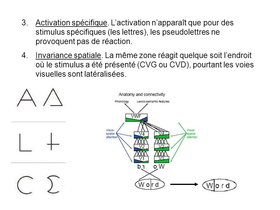 3.Activation spécifique.