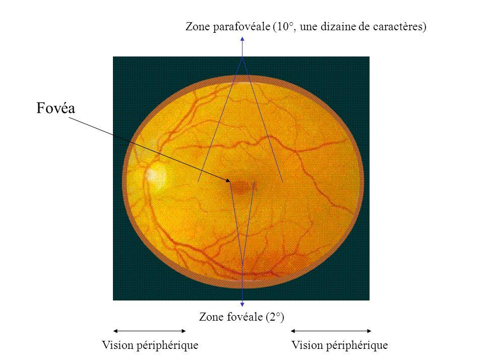 Fovéa Zone fovéale (2°) Zone parafovéale (10°, une dizaine de caractères) Vision périphérique