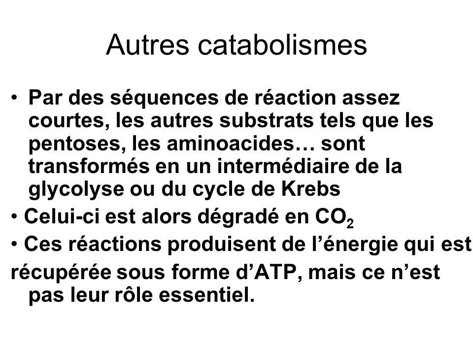 VOIES ANABOLIQUES Lanabolisme des systèmes aérobies procède généralement par réduction qui se fait par le NADPH : Lénergie nécessaire provient de lhydrolyse de lATP.