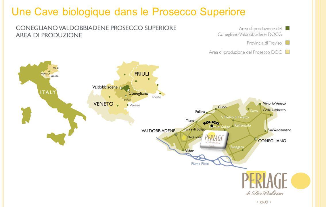 La Famille Nardi:Tiziano, Afra et les 7 Frères
