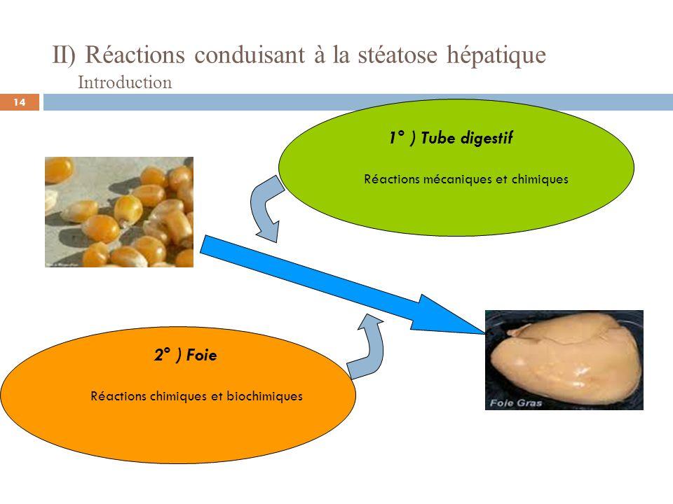 II) Réactions conduisant à la stéatose hépatique Matière sèche (MS) 86-88% Humidité12-14% Glucides Extractif non azoté (ENA) 75 - 80% Cellulose brute (CB) 2 - 13% Matières azotées totales (MAT )10 -11% Lipides2 - 6% Cendres1,5 - 5,5% Introduction Source: Ecole Nationale Vétérinaire de Lyon Composition chimique moyenne des grains de maïs (en % du produit brut) 15