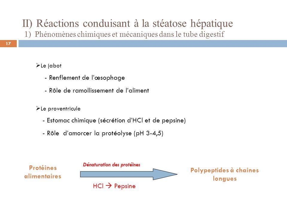 II) Réactions conduisant à la stéatose hépatique 1) Phénomènes chimiques et mécaniques dans le tube digestif Le gésier - Estomac mécanique - Protéolyse (pH 2- 3,5) Lintestin grêle - Termine la dégradation des substrats alimentaires -Absorption du glucose, des acides aminés et acide gras + glycérol 18