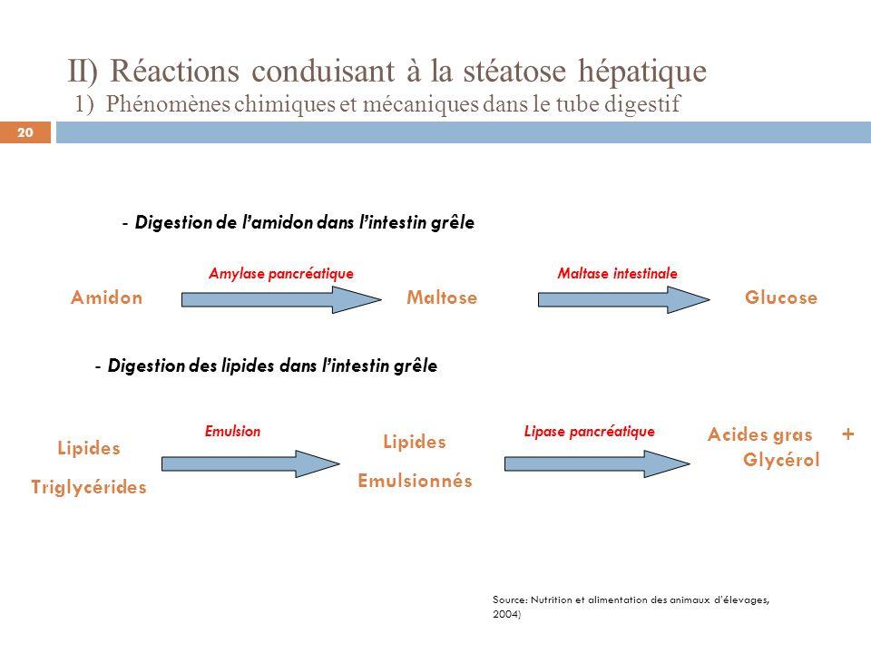 II) Réactions conduisant à la stéatose hépatique 2) Absorption et phénomènes biochimiques dans le foie - Absorption des nutriments Glucose Acides aminés Glycérol +AGL à chaines courtes entérocytes SangFoie Veine porte SangFoie entérocytes s Veine porte AGL à chaines longues SangFoie entérocytes Veine porte Acides biliaires + MicellesLymphe entérocytes Micelle Estérification => Chylomicron Chez les Volailles : Micelle Estérification => Portomicron Anthérocytes SANG FOIE Source: Hermier et Al.
