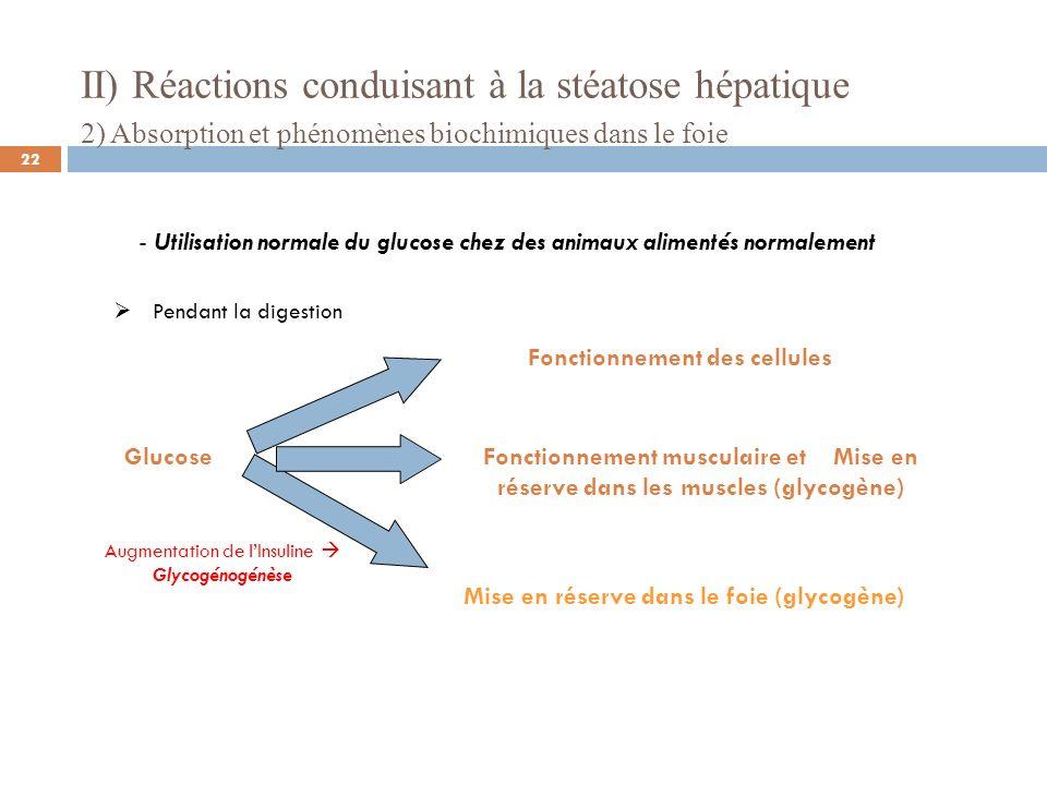 II) Réactions conduisant à la stéatose hépatique 2) Absorption et phénomènes biochimiques dans le foie - Utilisation normale du glucose chez des animaux alimentés normalement Glucose Fonctionnement des cellules Fonctionnement musculaire et utilisation du glycogène ou restitution Déstockage du glycogène du foie Diminution de lInsuline Glycogénolyse Après la digestion 23