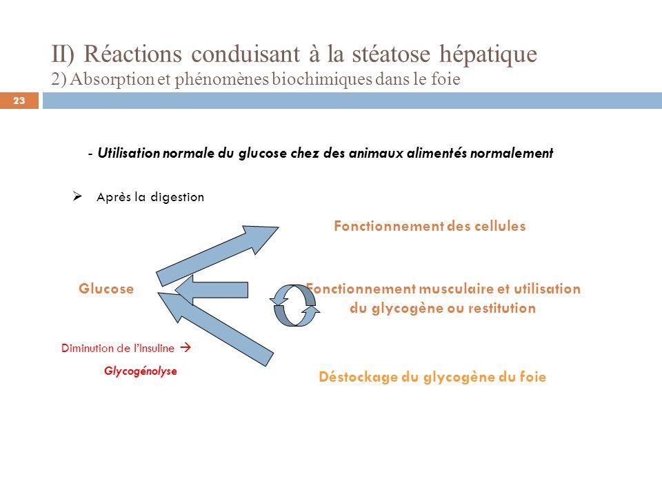 II) Réactions conduisant à la stéatose hépatique 2) Absorption et phénomènes biochimiques dans le foie - Utilisation normale du glucose chez des animaux en situation de légère suralimentation énergétique Glucose Fonctionnement des cellules Fonctionnement musculaire et utilisation du glycogène ou restitution Déstockage dune partie du glycogène du foie Diminution de lInsuline Glycogénolyse Après la digestion Triglycérides+ Phospholipide et Glycérol Stockage sous forme de graisse Lipogenèse 24