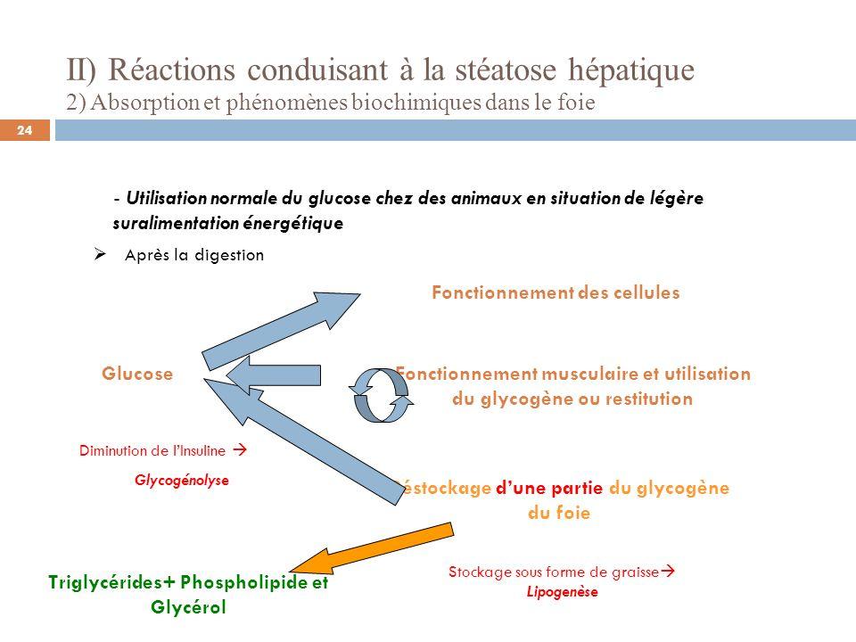 II) Réactions conduisant à la stéatose hépatique 2) Absorption et phénomènes biochimiques dans le foie - Utilisation normale du glucose chez des animaux en situation de légère suralimentation énergétique Devenir de ces triglycérides TriglycéridesLipoprotéines Phospholipide et Glycérol VLDL Lipoprotéines HDL VLDL Triglycérides des portomicrons Stockage dans les tissus périphériques Enzyme: lipoprotéine lipase EXPORTATION (Source: Fournier et Al 1997) 25