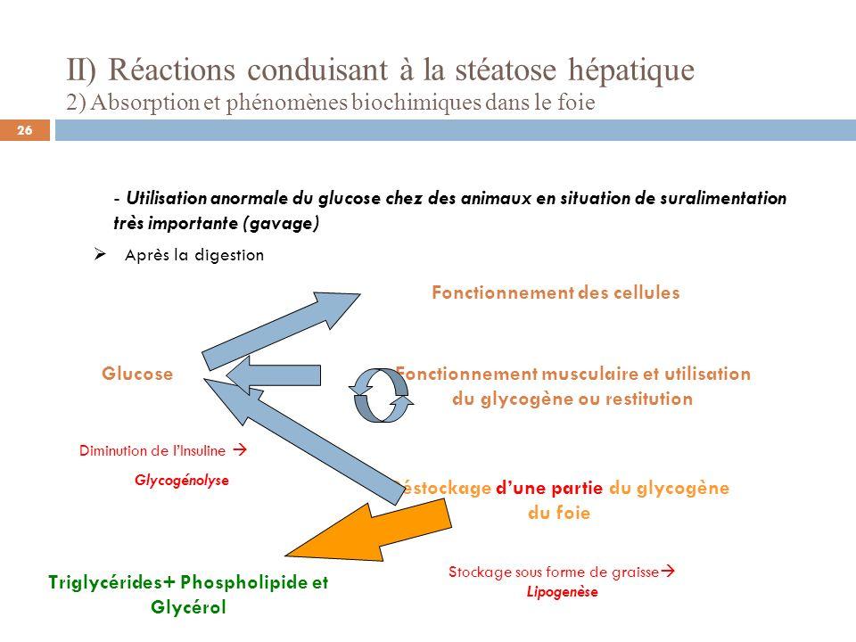 II) Réactions conduisant à la stéatose hépatique 2) Absorption et phénomènes biochimiques dans le foie - Utilisation anormale du glucose chez des animaux en situation de suralimentation très importante (gavage) Devenir de ces triglycérides Triglycérides Phospholipide et Glycérol VLDL HDL Triglycérides Foie Tissus périphériques Phospholipide et Glycérol Foie Tissus périphériques (Source: Gabarrou et Al 1996; Davail et Al 2003)) INSULINE 27
