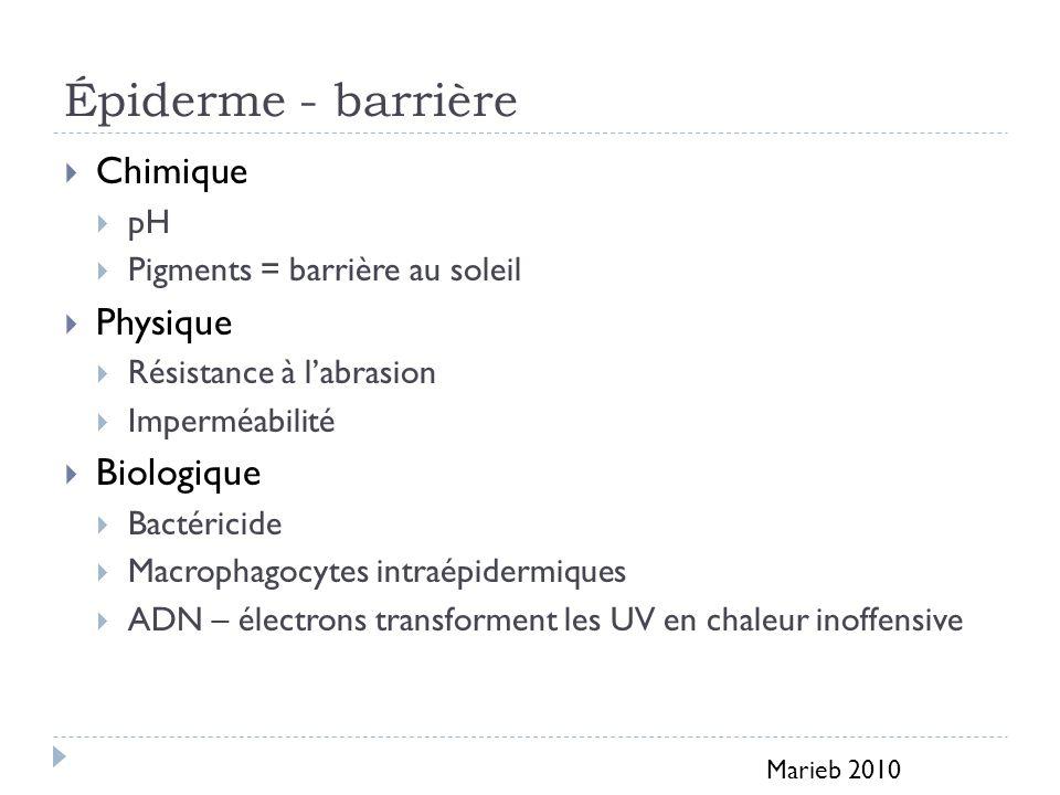 Épiderme Types cellulaires (4) http://vdsciences.e-monsite.com/rubrique,organogenese-vertebre-2,758297.html