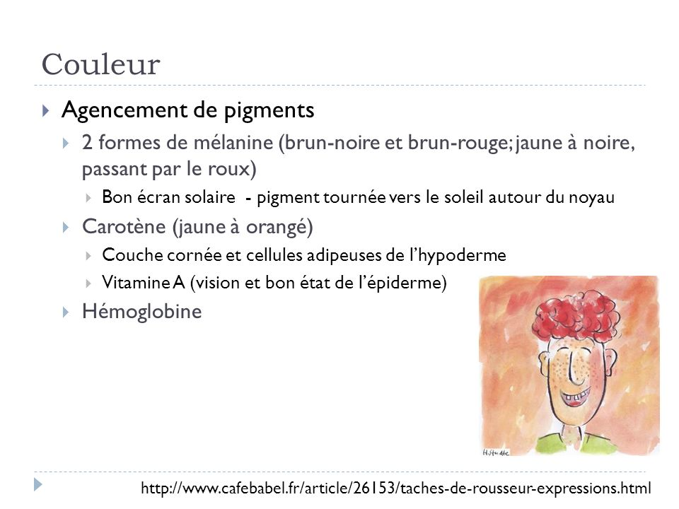 Couleur Migration du pigment vers les couches plus supérieures de la peau Mélanosomes dégradés par lysosome Peau foncé vers léquateur Exposition au soleil – stimule mélanocyte