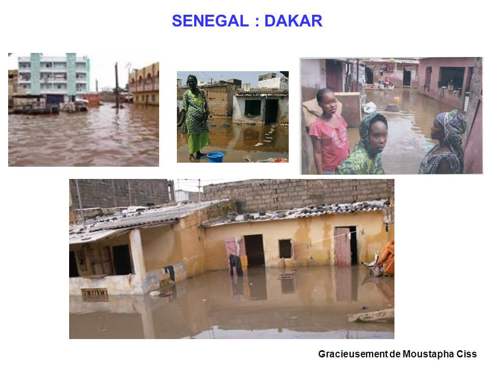 Bétail décimé vague de froid et pluies glaciales (Nord Sénégal 2002)