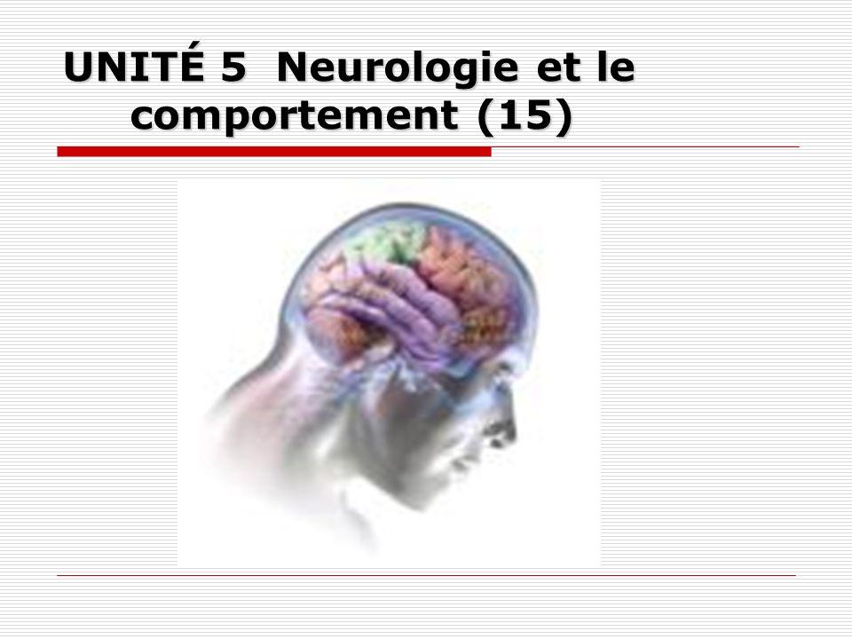5.1 Anatomie du système nerveux (3) 5.1.1 Système nerveux 5.1.2 Cerveau