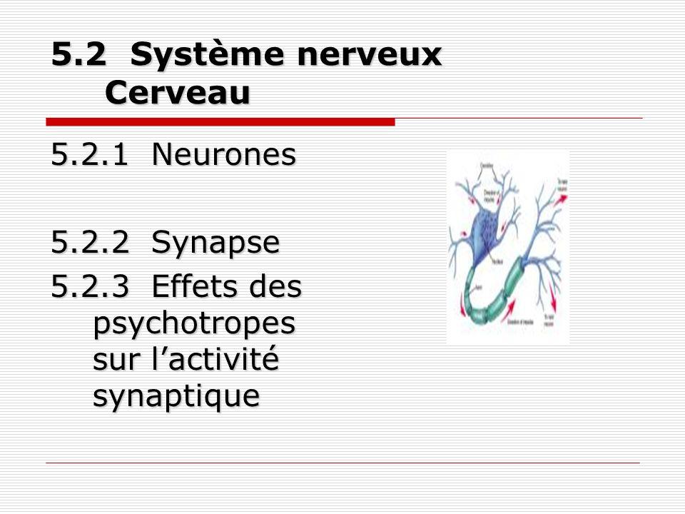 5.3 Récepteurs sensoriels(3)