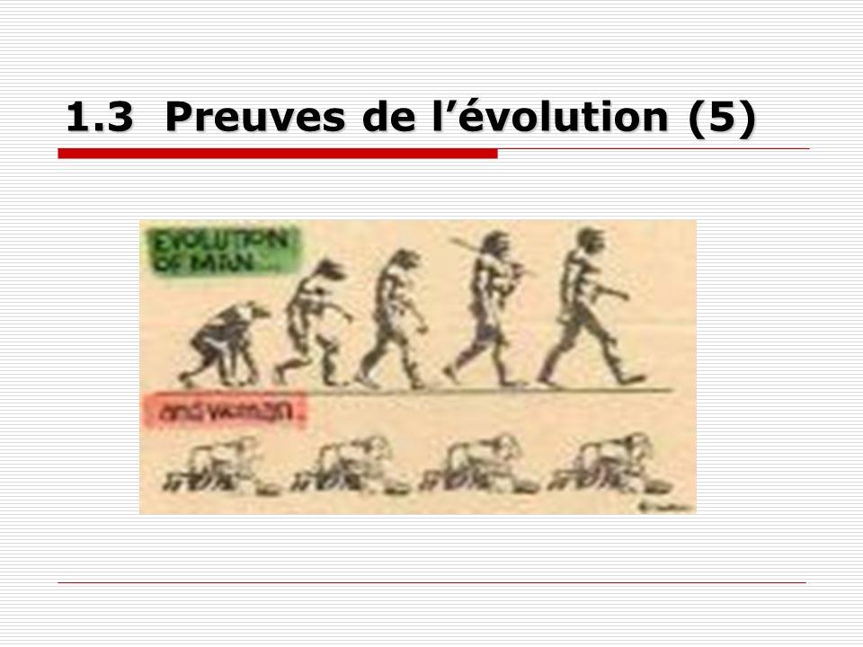 1.3 Peuves de lévolution (suite) 1.3.1 Paléontologie 1.3.2 Biochimie 1.3.3 Structures anatomiques homologues 1.3.4 Embryologie 1.3.5 Exemples modernes dévolution observés