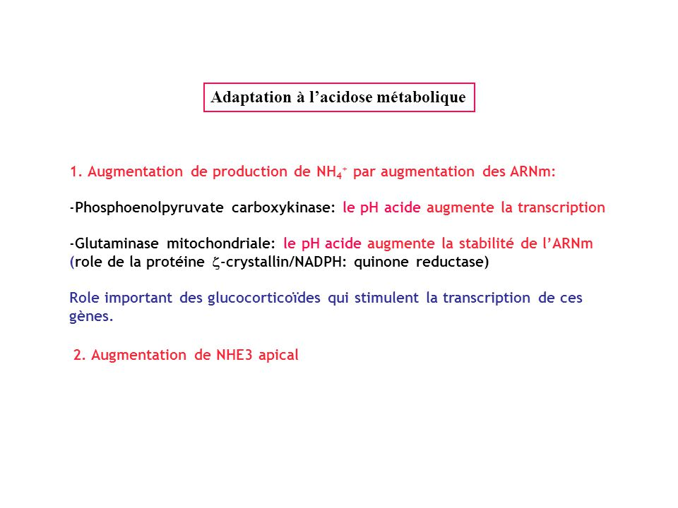 Stabilisation de l'ARNm de la glutaminase par  -crystallin/NADPH:quinone reductase Acidose métabolique pH acide UUAAAAUA GA mRNA 3' UTR  -crystallin UUAAAAUA liaison augmentation 1/2 vie Etat acid-base normal UUAAAAUA GA mRNA 3' UTR UUAAAAUA  -crystallin RNase dégradation Pas de liaison