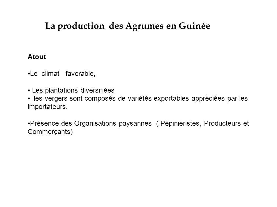 Exportations et Contraintes en Guinée Les exportations des agrumes sont faibles et représentent moins de 1 000 T par an, ce qui est en deçà des prévisions de la lettre de la Politique de Développement (LPDA), qui prévoyait 3 500 tonnes d'exportation en 2005.