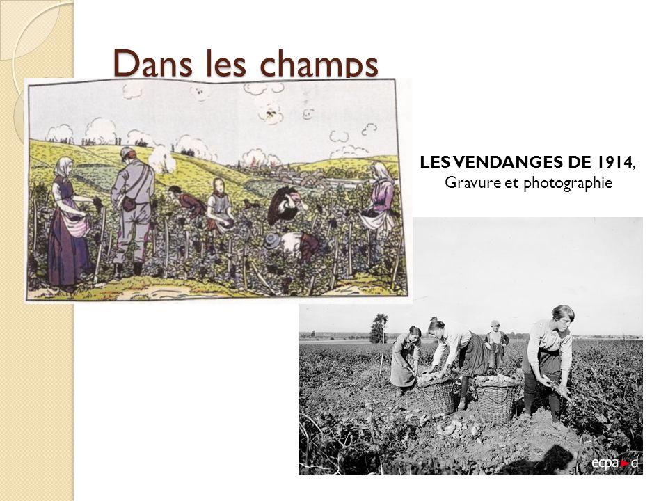 Photographie prise en 1917 dans l Oise Manque d hommes pour les travaux agricoles, manque de chevaux également qui avaient été réquisitionnés pour la logistique