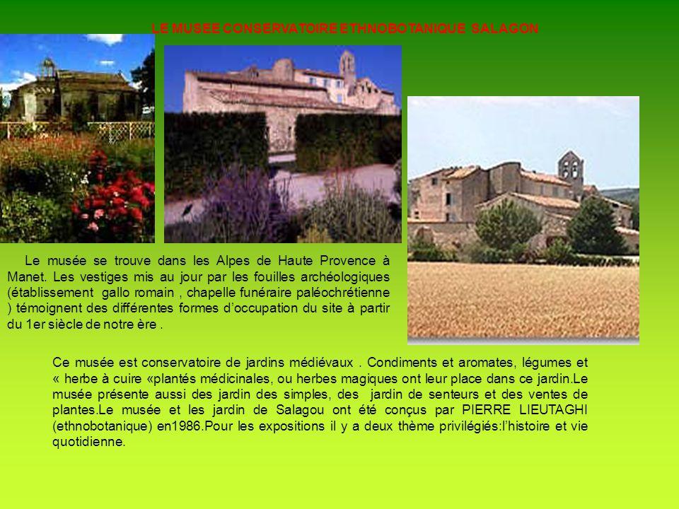 Un arbre symbole de la Provence lolivier Lolivier est apparu dans les pays Niçois y a deux millénaires.L olivier arbre millénaires appartient à la famille des oléacées, cest un arbre de pays chauds.