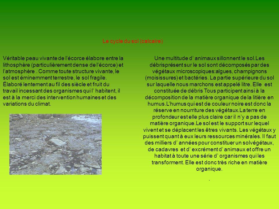Ecosystème Forestier Le concept d écosystème a été présenté par FORBES en 1887 quil appela « microcosme » ensuite cest TRANSLEY en 1935 qui renomma « microcosme » en « écosystème ».