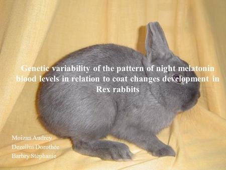 Genetic variability of the pattern of night melatonin blood levels in relation to coat changes development in Rex rabbits Moizan Audrey Dezellus Dorothée.