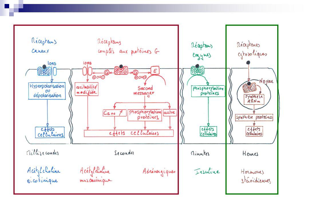Médicaments ligands de récepteurs Agonistes Substance qui se fixe sur un récepteur, le stimule et entraîne une réponse biologique Un agoniste mime les effets dun ligand endogène du recepteur Antagonistes Substance qui se fixe sur un récepteur, sans déclencher de réponse biologique Un antagoniste agit en inhibant les effets produits par un ligand endogène