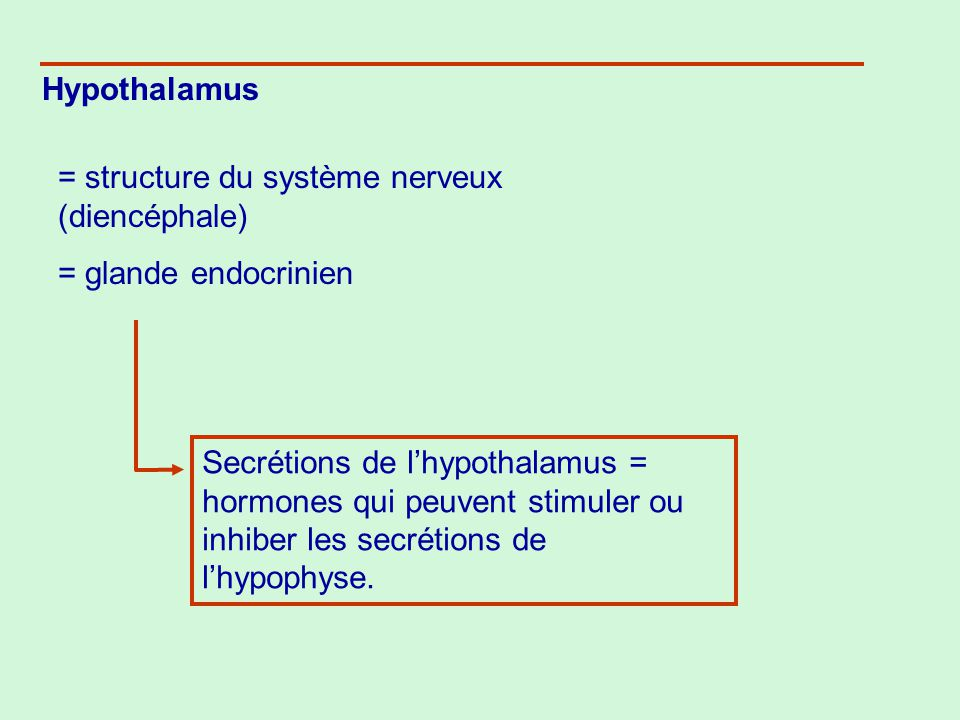 1.Hypothalamus La partie du cerveau reliée à lhypophyse, il surveille le corps constamment.