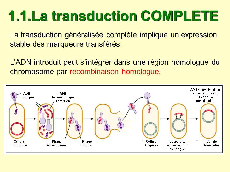 Lintégration du fragment dADN de la cellule donatrice dans le chromosome de la cellule réceptrice aboutit à : une modification du génome de la bactérie réceptrice un remplacement complet des gènes homologues aux gènes transduits sur le chromosome de la bactérie réceptrice qui ne sera diploïde pour aucun gène.