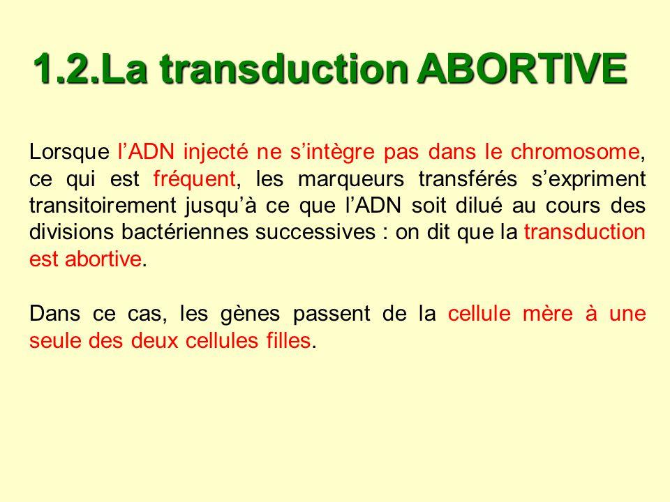 La transmission est donc unilinéaire pendant plusieurs générations et les gènes du fragment transféré continuent à sexprimer.
