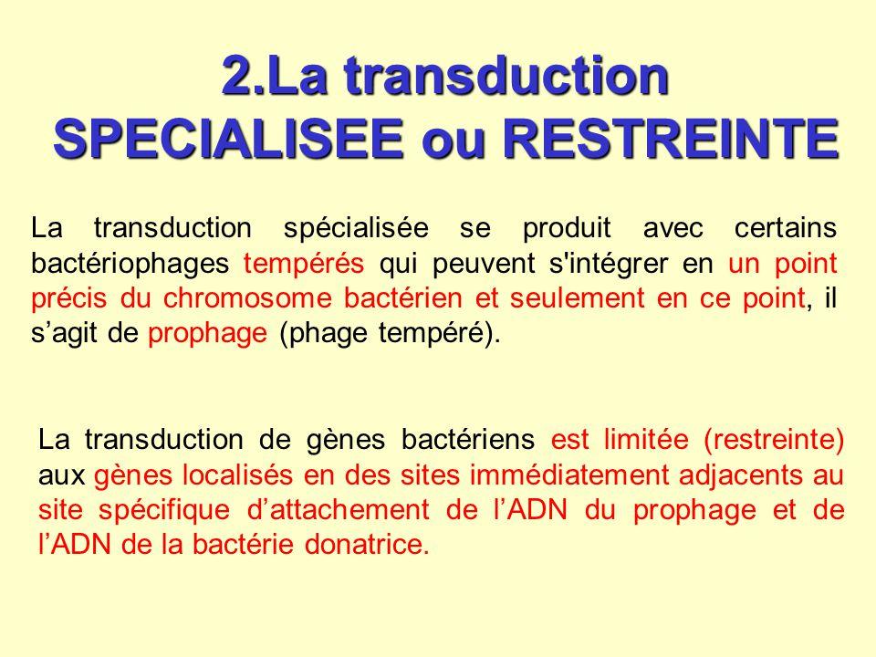 La transduction du gène de la bactérie donatrice à la bactérie réceptrice se fait après lysogénisation de la bactérie réceptrice.