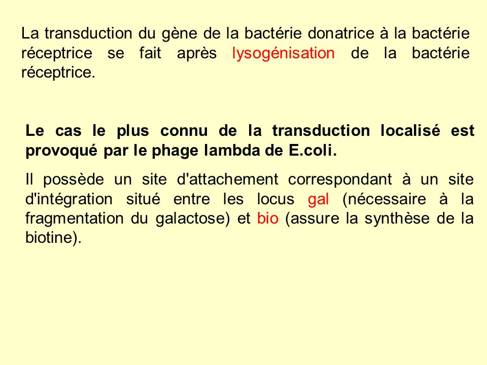 2.1.Lintégration du phage 2.1.