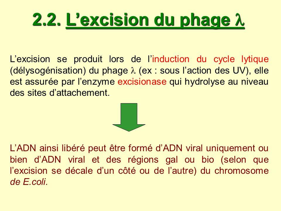 On parle alors d : Excision normale: reconstitution de l ADN du phage
