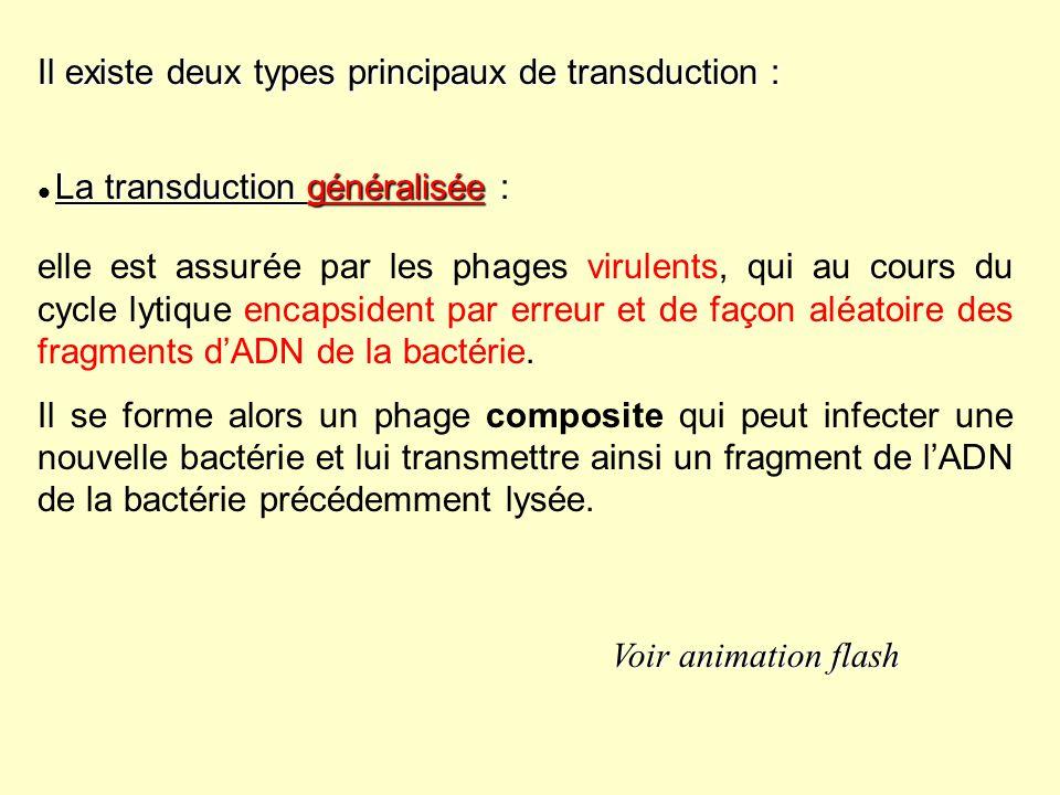 La transduction restreinte ou spécialisée La transduction restreinte ou spécialisée : Elle est assurée par les phages tempérés qui sinsèrent toujours au même endroit sur le chromosome bactérien.