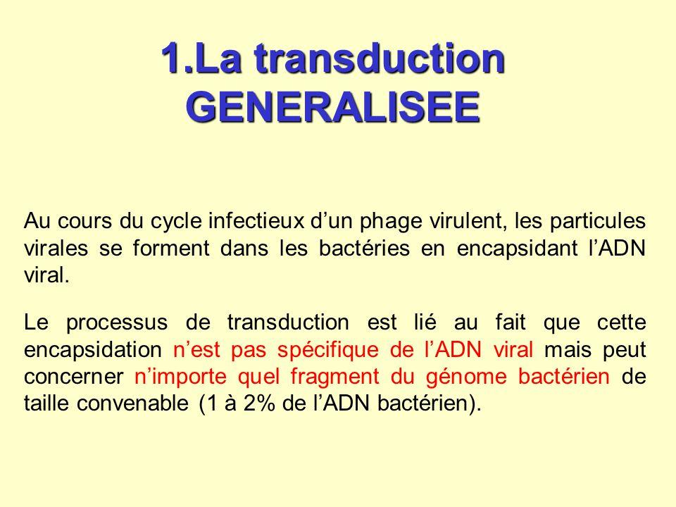 Ainsi, lors de la production des phages, avec une faible fréquence (<1%), des fragments dADN bactérien du chromosome bactérien partiellement dégradé peuvent être encapsidés par erreur dans des phages, formant ainsi des particules transductrices qui conservent les propriétés « infectieuses » des particules virales normales.
