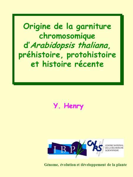Origine de la garniture chromosomique d'Arabidopsis thaliana,