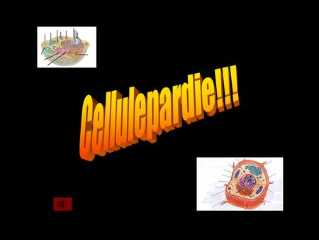 Cellulepardie!!!.