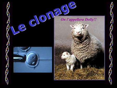 Le clonage On l'appellera Dolly!!. 1. La brebis Dolly Les applications du clonage + = 2. Raël et le premier clone humain 3. Les animaux transgéniques.