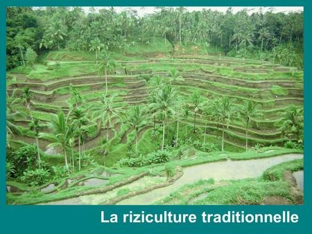 La riziculture traditionnelle