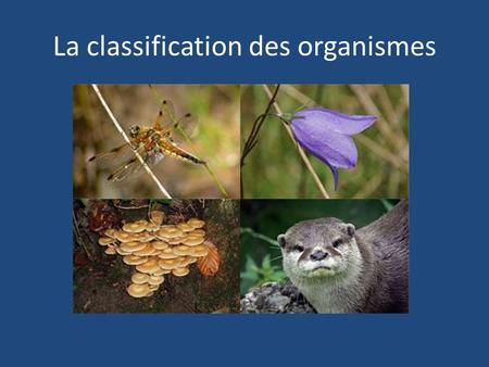 La classification des organismes